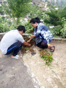 Observance of Green Mizoram Day 2021